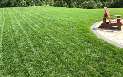 My Favorite Grass Seed – Turf Type Tall Fescue