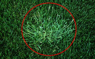 How to prevent crabgrass